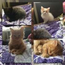 Котята в добрые руки, в г.Можайск