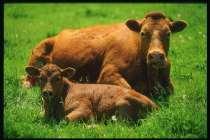 Необходимы инвестиции в сельское хозяйство, в Раменское