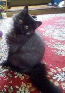 Кошечка с загадочным окрасом, в Краснодаре