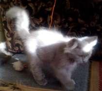 красивый котенок, в Краснодаре