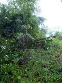 Расчистка участка. Покос травы, бурьяна. Спил дерева., в Клине