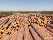 Лес на корню, в Калуге