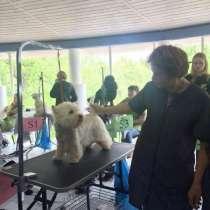 Стрижка, тримминг, стриппинг собак, в г.Конаково