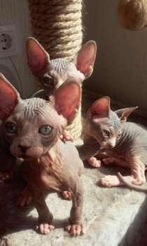 Очаровательный котенок ищет хозяина, в Анапе