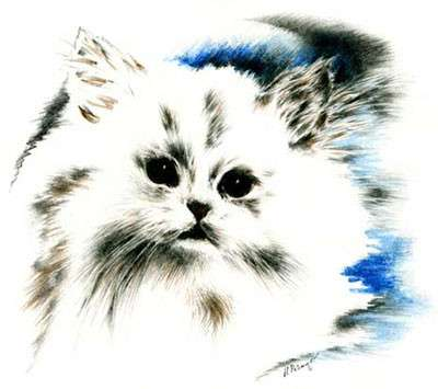 Картины из сухоцвета Смешные коты совыдомовенки