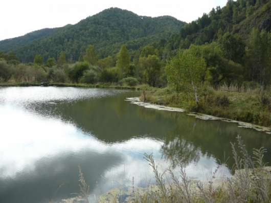 380 соток на реке на Г.Алтае