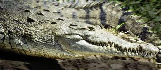 Экзотическое мясо: крокодил, дикобраз, питон, из Вьетнама