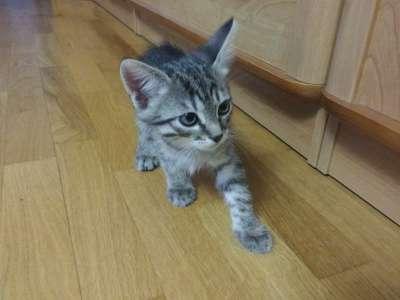 Отдам даром котята