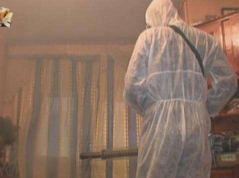 Уничтожение клопов и тараканов в Фрязино
