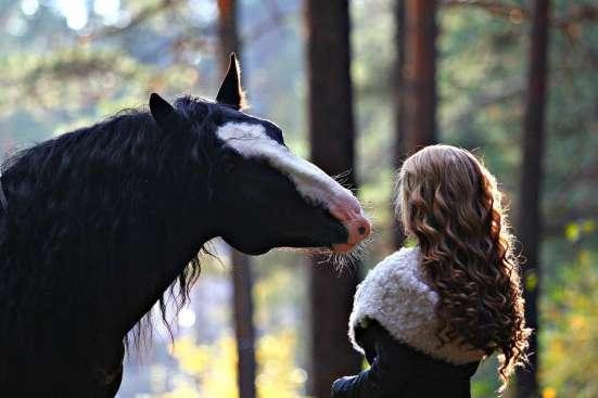 Фотосессия с лошадьми! в Красноярске Фото 3