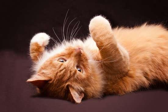 Кот Семен в добрые руки