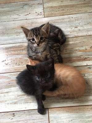 Котята в добрые руки в Казани Фото 1