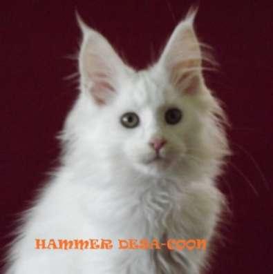 Котята породы мейн-кун в г. Нальчик Фото 2
