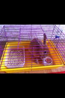 Продам кролика в Старом Осколе Фото 2