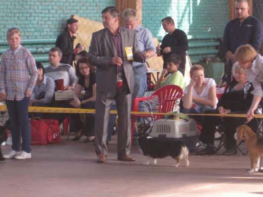 Питомник вельш корги пемброк ищет щенка кобелька в Краснодаре Фото 2