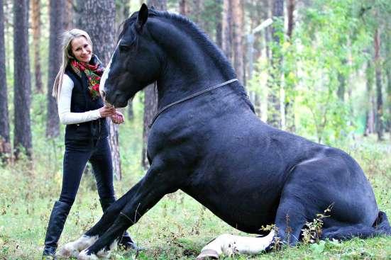 Фотосессия с лошадьми!