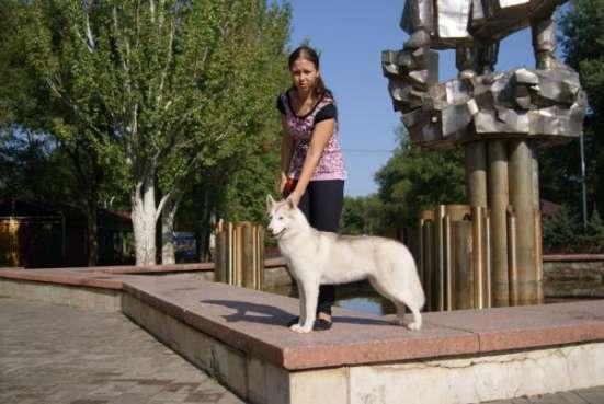 Услуги хендлинга в Ростове/Таганроге Фото 2