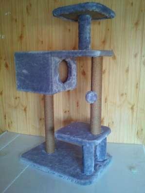 Игровые комплексы для кошек новые