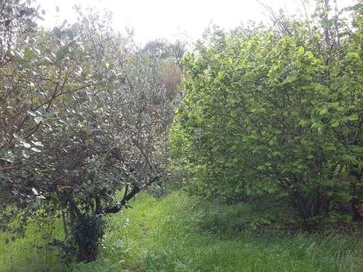 Продаю земельный участок в Адлере в Сочи Фото 2