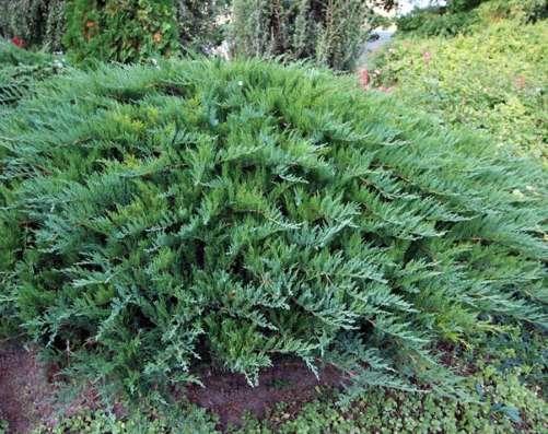 Декоративные растения Flora - Dekor в г. Гродно Фото 1