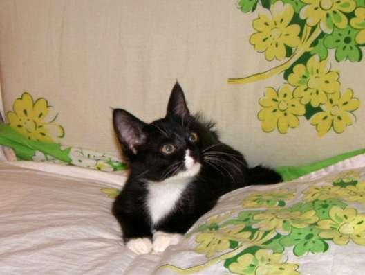 Котята в дар. м.Сходненская в Москве Фото 1