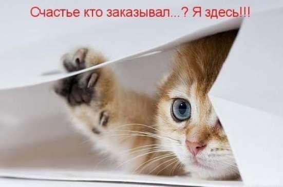 Передержка животных в своем доме