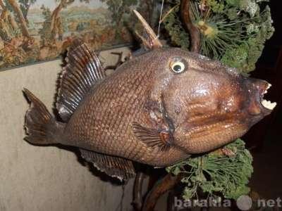 Чучела морских рыб для Дизайна