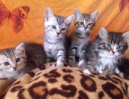 Продам котят в Новосибирске Фото 1