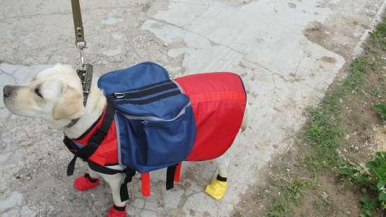 Ошейники шлеи попоны сумки потяги перестежки