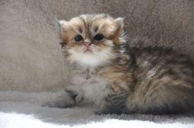 Удивительные котята в г. Тимашевск Фото 2