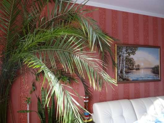 Финиковая пальма 3,5 м
