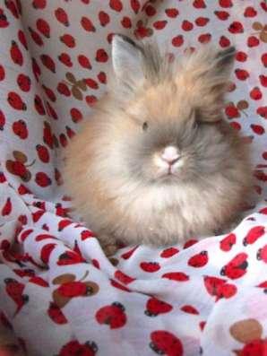 кролика