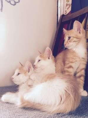 Котята в дар в г. Минск Фото 4