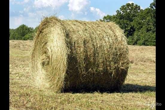 Тверская АПК реализует пшеницу кормовую 3 кл., овес, сено