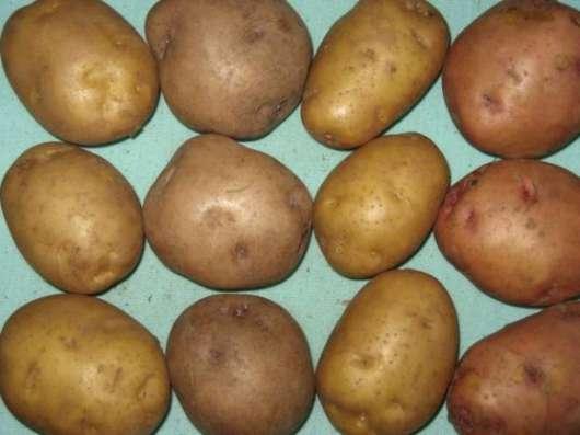 Элитный семенной картофель - почтой