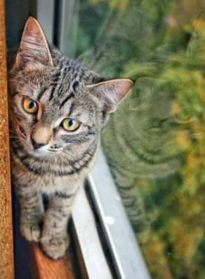 Отдам даром Жизнерадостная котенок Анфиса яркая тигр в Москве Фото 4
