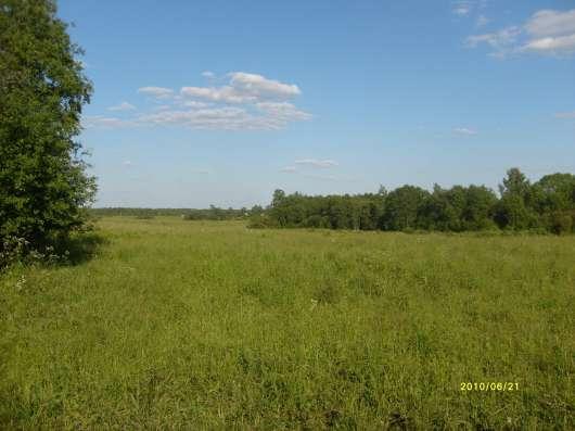 4.1 га земли сельхоз.назначения в 10 км от Углича Яросл. обл Фото 6