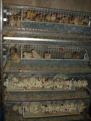 Клетки для кур и перепелов